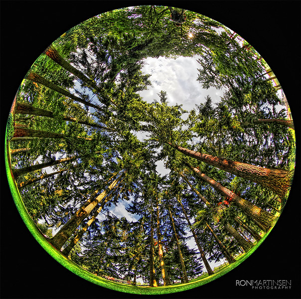 HDR Fisheye Forest - Copyright Ron Martinsen - All Rights Reserved